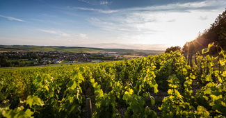 You want to know more about Climats and lieux-dits de Bourgogne ?