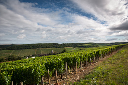 The Village of Fleys in the wine-growing region of Chablis © BVIB / IBANEZ A