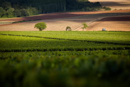 © BIVB / IBANEZ A. Landscape in the wine growing region of Chablis.