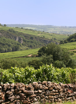 © BIVB / ARMELLEPHOTOGRAPHE Meuger in the wine growing region of the Mâconnais