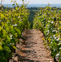 © BIVB / ARMELLEPHOTOGRAPHE.COM  View of the ground in Burgundy vineyards.