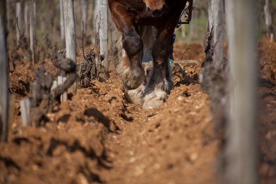© BIVB / ARMELLEPHOTOGRAPHE.COM Ploughed in horse
