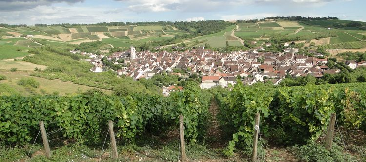 Green light for the Cités des Vins de Bourgogne!
