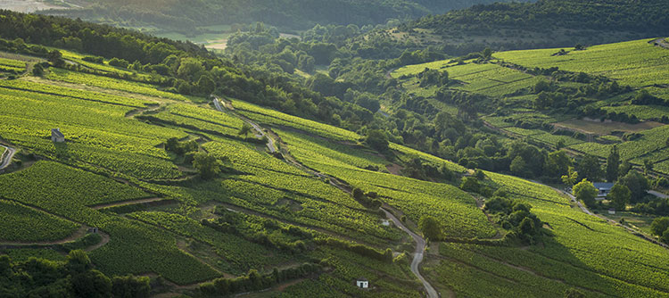 Come discover the natural treasures of the Bourgogne wine region!