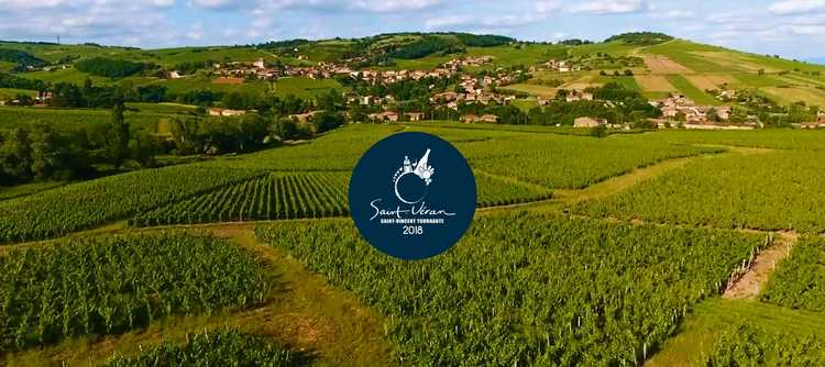 Saint-Vincent at the heart of Burgundy