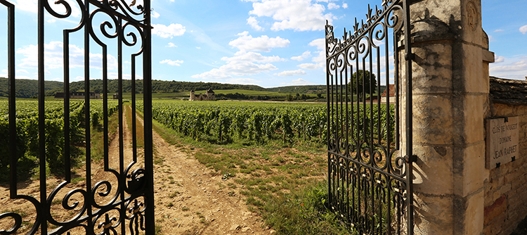 BIVB and WSET want to open the doors of the 84 Bourgogne AOCs to wine students