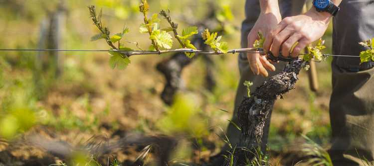 Bourgogne may a been produced another extra-ordinary vintage in 2019