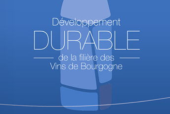 Sustainable development in the Bourgogne wine industry
