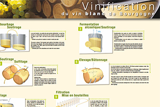 Poster: Making white wines