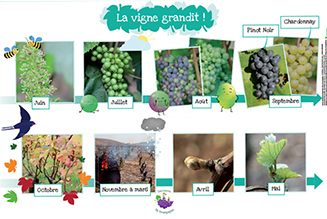 The winegrowers' calendar - 7 to 9 years