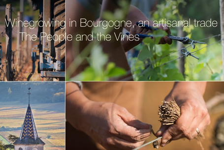 Winegrowing in Bourgogne, an artisanal trade : The People and the Vines
