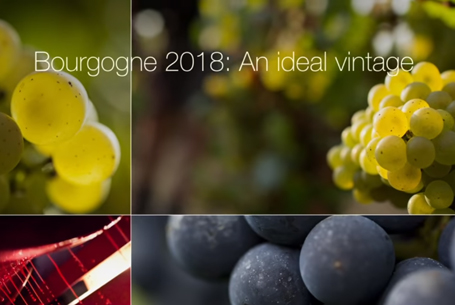 The 2018 vintage: An ideal vintage