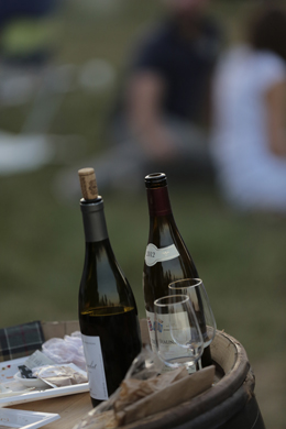 Wine festivals guide
