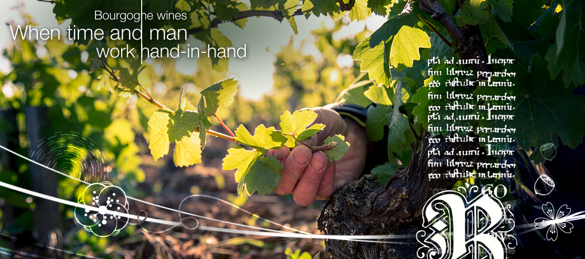 Our winegrowers, our expertise