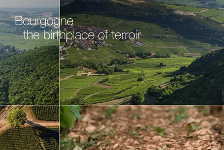 """Bourgogne, the birthplace of terroir"""