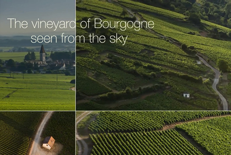 The vineyard of Bourgogne seen from the sky