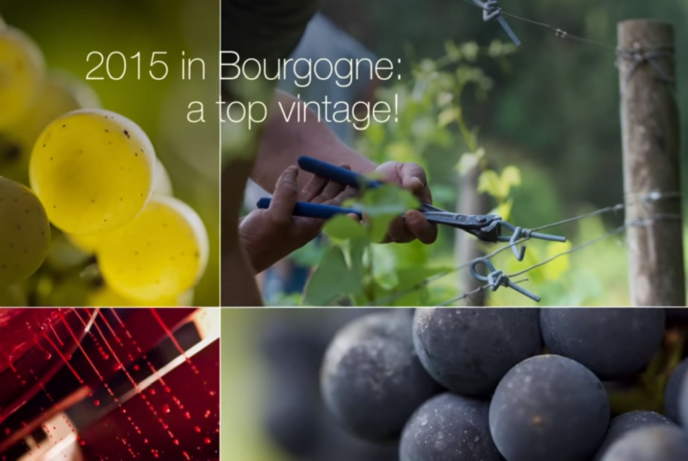 2015 in Bourgogne : the top vintage