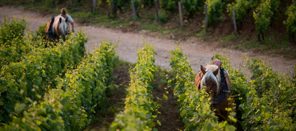 Sustainable Development for Bourgogne wines ©BIVB/M. JOLY