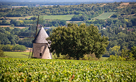 Santenay, an appellation of the Côte de Beaune in Bourgogne © BIVB / www.armellephotographe.com