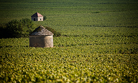 Help from the Association for the Climats of the Bourgogne winegrowing region with restoring walls and huts © BIVB / www.armellephotographe.com