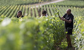 The winegrowing trade in the Bourgogne region - © BIVB / Sébastien Boulard
