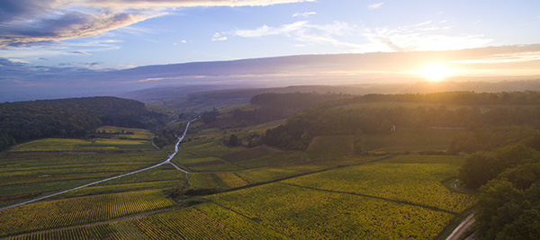 © BIVB / Aurélien Ibanez - The Creation of two new Bourgogne appellations: Bourgogne Côte d'Or and Vézelay