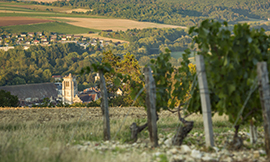 Wine tourism, the Tonnerrois winegrowing region, and the Vignobles & Découvertes label - © BIVB / Aurélien Ibanez