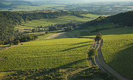 All you need to know about the Bouzeron appellation - © BIVB / Aurélien Ibanez