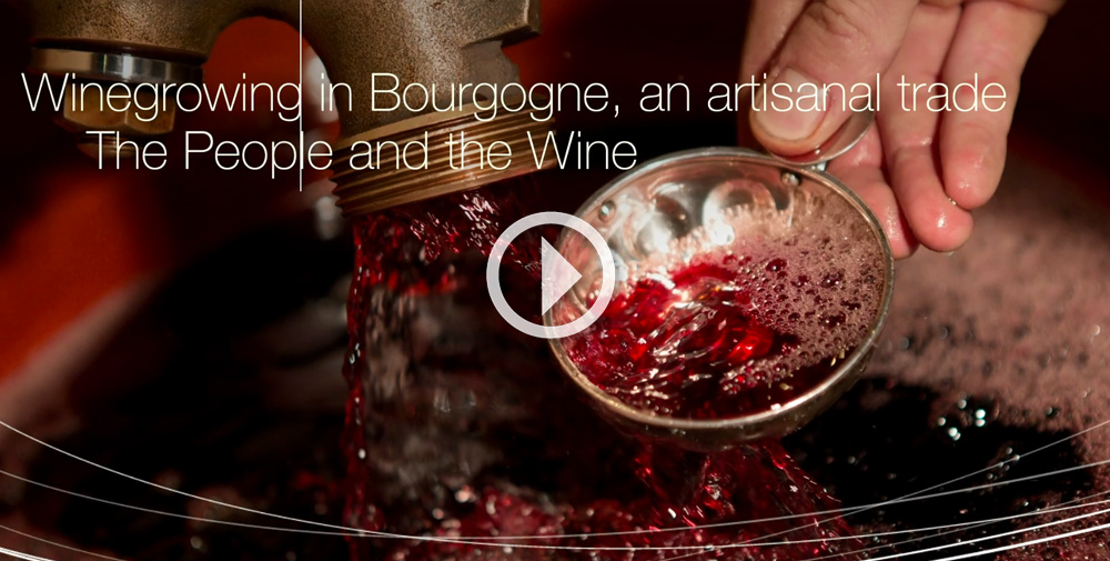 © BIVB / All rights reserved - Teaser of the movie Vignerons en Bourgogne, ...