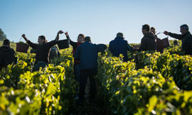 2014: A promising vintage for Bourgogne wines ©BIVB/A. IBANEZ