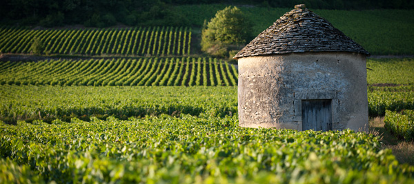 The Cité des Vins de Bourgogne will operate across the entire winegrowing region ©BIVB/M. JOLY