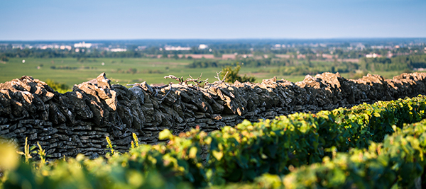 Nature smiled on the winemakers of the Bourgogne wine region in 2015 ©BIVB/A. IBANEZ