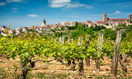 Irancy, Saint-Bris, Bourgogne Tonnerre, Bourgogne Chitry... Just some of the gems of the Grand Auxerrois region ©BIVB/A. IBANEZ