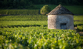 Do you want to help protect the tiny stone wall and huts in Bourgogne? ©BIVB/Michel Joly